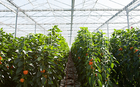 Мускулистая корова, антиглобализм и помешательство: кого обрадовал запрет ГМО
