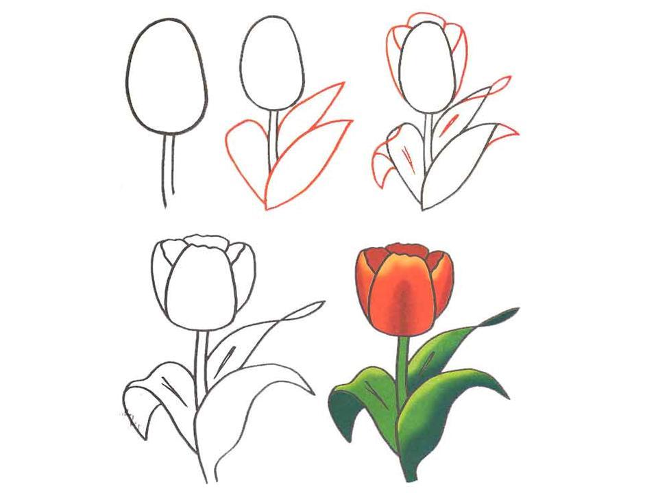 Цветы рисовать поэтапно легко