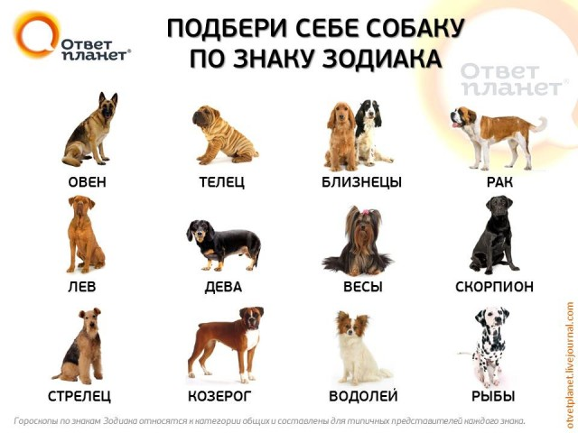 Женщи  по гороскопу рак и собака