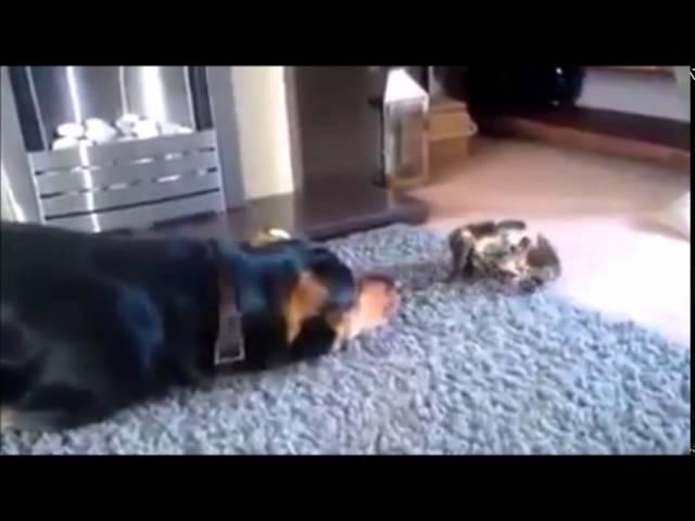 Kediler ve Ke Dublaj izle 720p HD