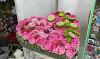 I Фестиваль садов и цветов
