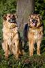 Выставка бездомных собак из приюта «Дубовая роща»