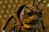 Приключения Флика (A Bug`s Life)