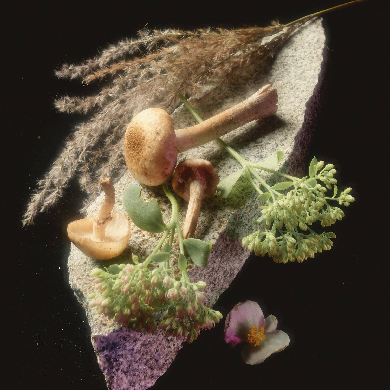 Опенок осенний. Идеален для грибников-любителей, ищущих быстрый способ наполнить корзину: растет обширными группами в хвойных и лиственных лесах, рядом с болотами, в валежниках, на пнях и на гниющей древесине