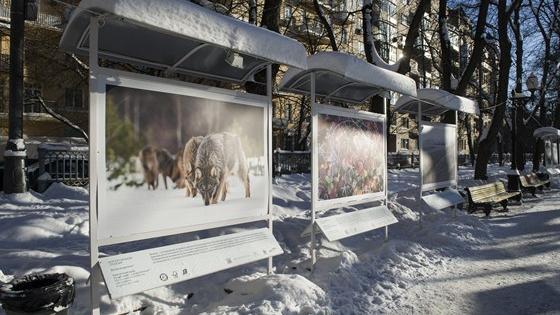 Лесные истории. Зима