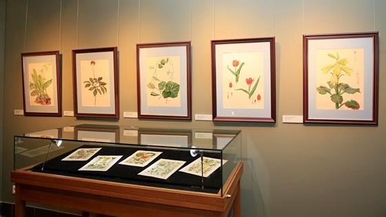 Ботанический рисунок. Наука и искусство