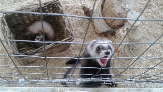 Контактный зоопарк «Бебека»