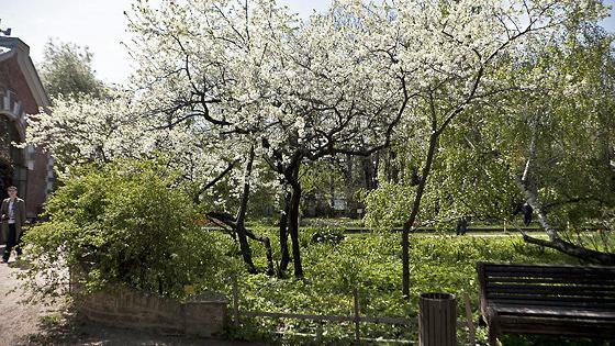 Аптекарский огород (Ботанический сад МГУ)