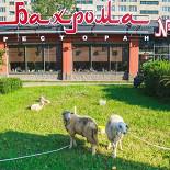 Ресторан Бахрома - фотография 5