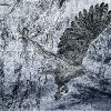 Юкио Кондо. Art for All