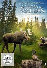 Постер Чудесный лес
