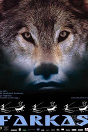 Волк / Farkas