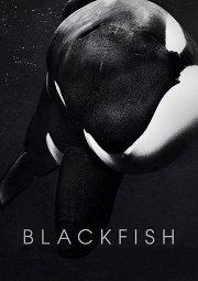 Постер Черный плавник