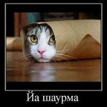 Фото Денис Борисов