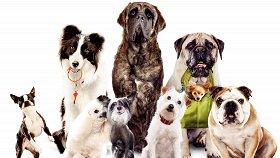Отель для собак / Hotel for Dogs