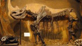 Палеонтологическая экспозиция