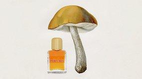 Спорная территория: духи сзапахом грибов