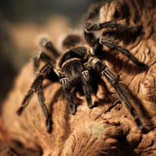 Удивительный мир пауков