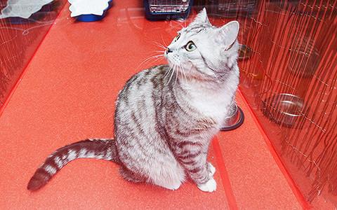 «Сэр Кот» — гостиница для котиков