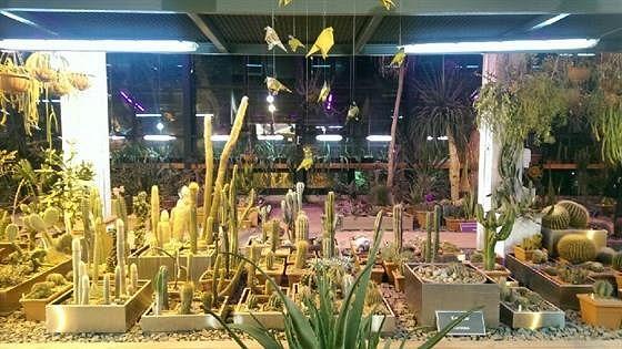 Сад хищных растений