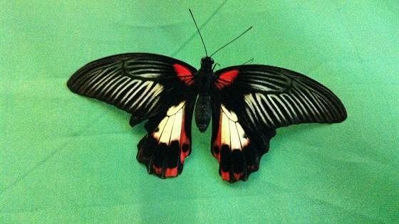 Живые бабочки и пауки мира