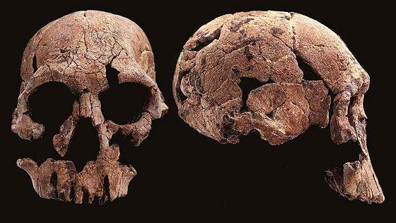 10 черепов, которые потрясли мир