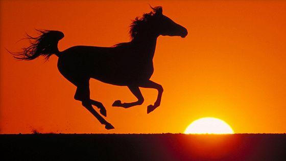 Приключения черного скакуна (The Young Black Stallion)