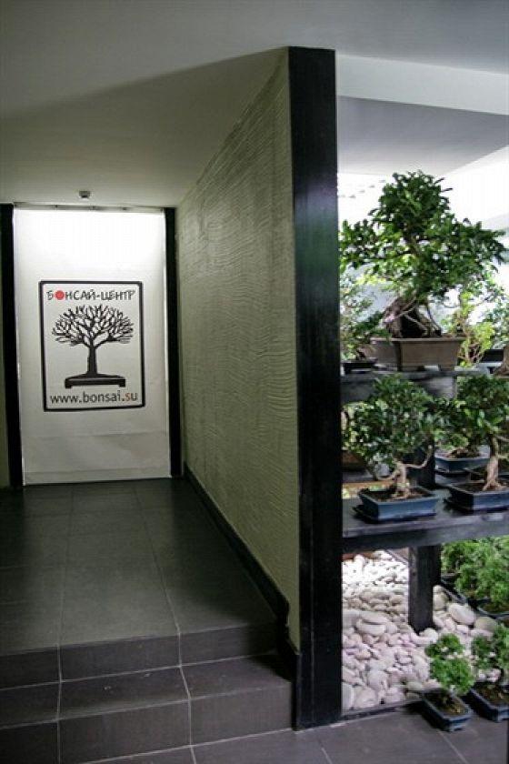 Бонсай-центр