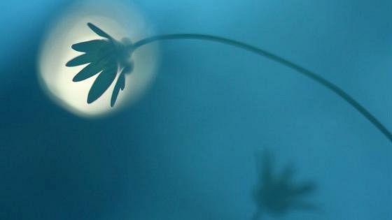 Фестиваль дикой природы «Золотая черепаха»