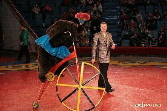 Слоны и медвежье шоу
