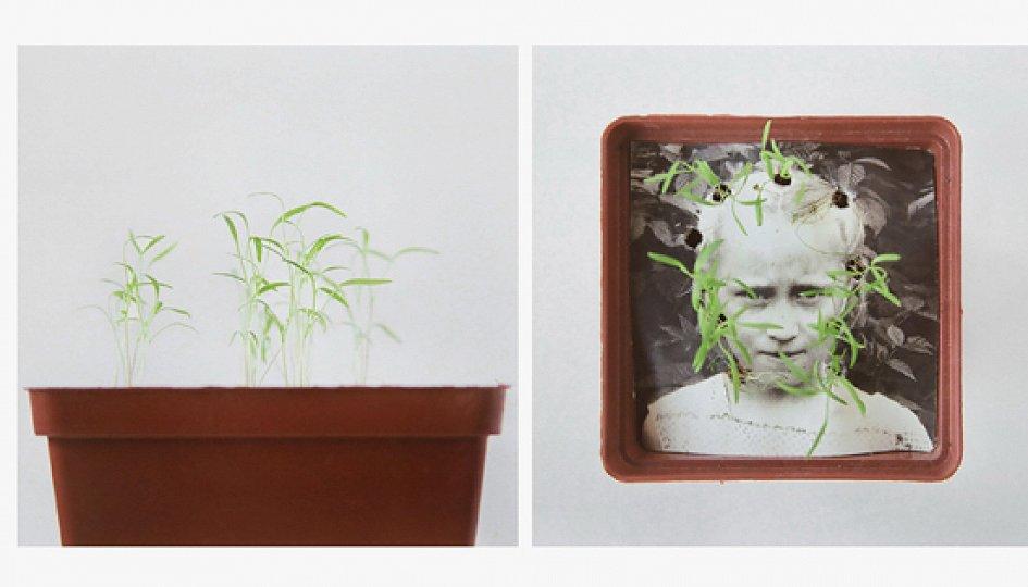 Выставки: Анастасия Богомолова