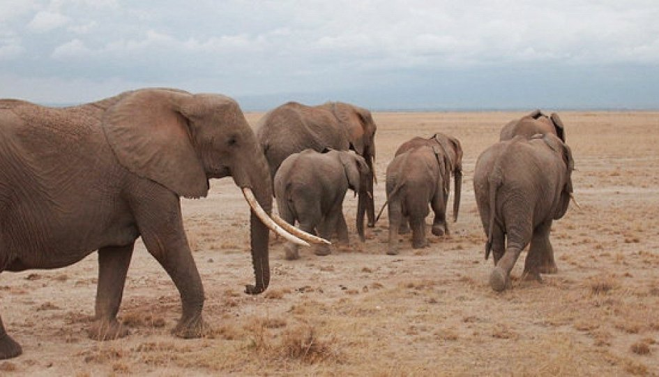 Кино: «Слоны-пигмеи острова Борнео»