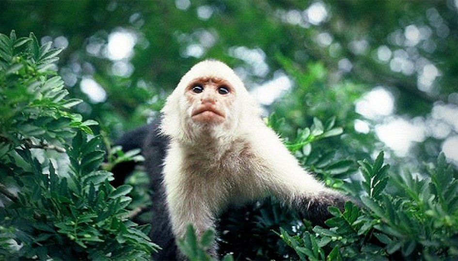 Кино: «Загадка царства обезьян»