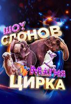 Шоу слонов и магия цирка