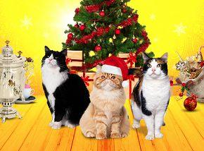 Как коты спасли Федору (талон на подарок)